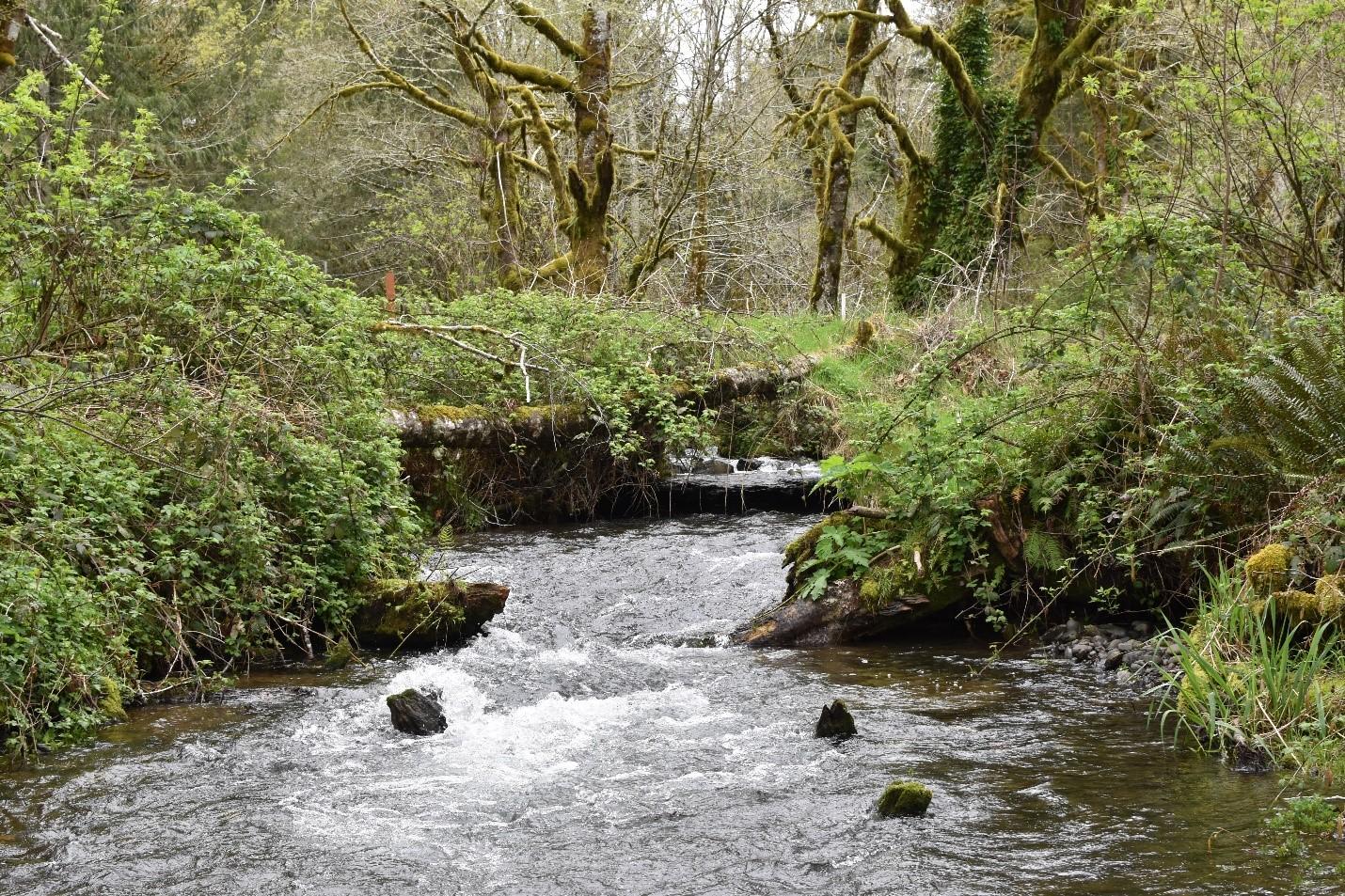 Bear_downstream_pre